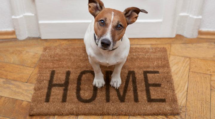 115183-cachorro-em-apartamento-como-preparar-o-ap-para-a-chegada-do-pet