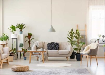 Vantagens de ter plantas dentro do apartamento e como cuidar delas